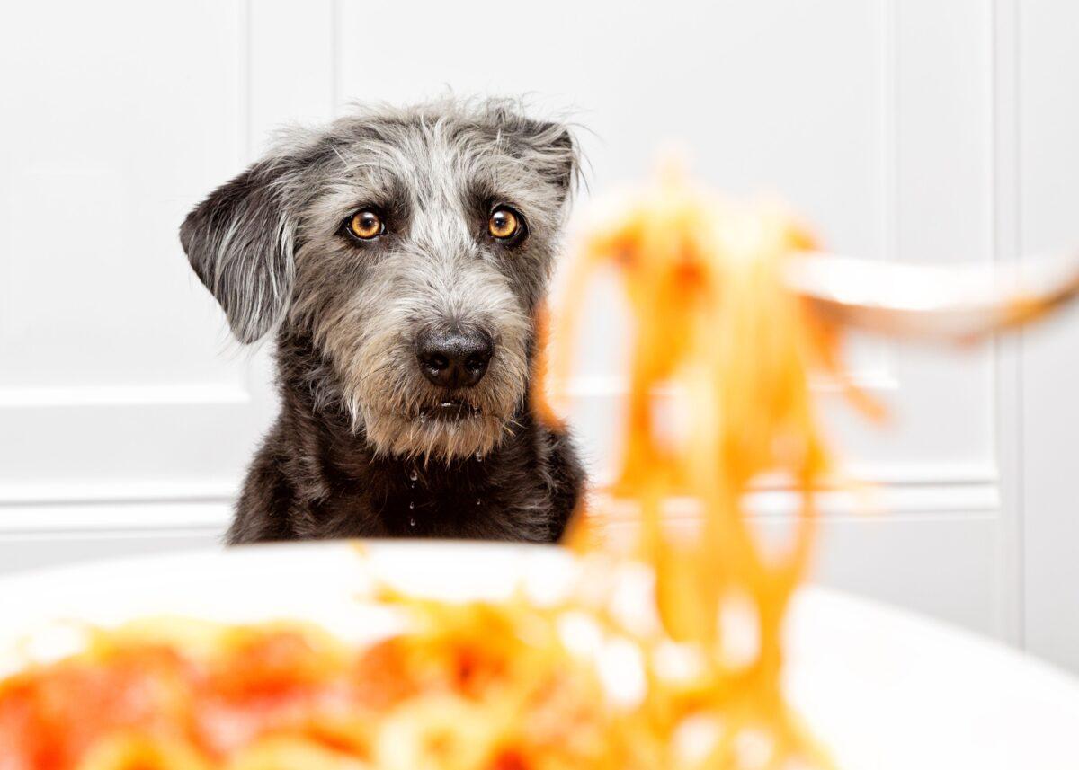 آیا ماکارونی برای سگ مضره