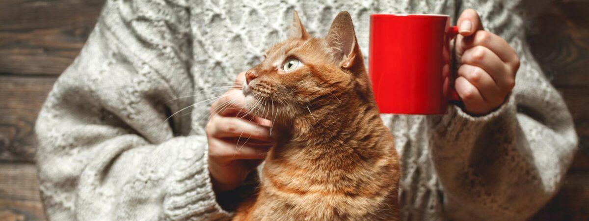نوشیدنی های حاوی کافئین برای گربه مضر است