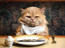 غذاهای ممنوعه برای گربه ها