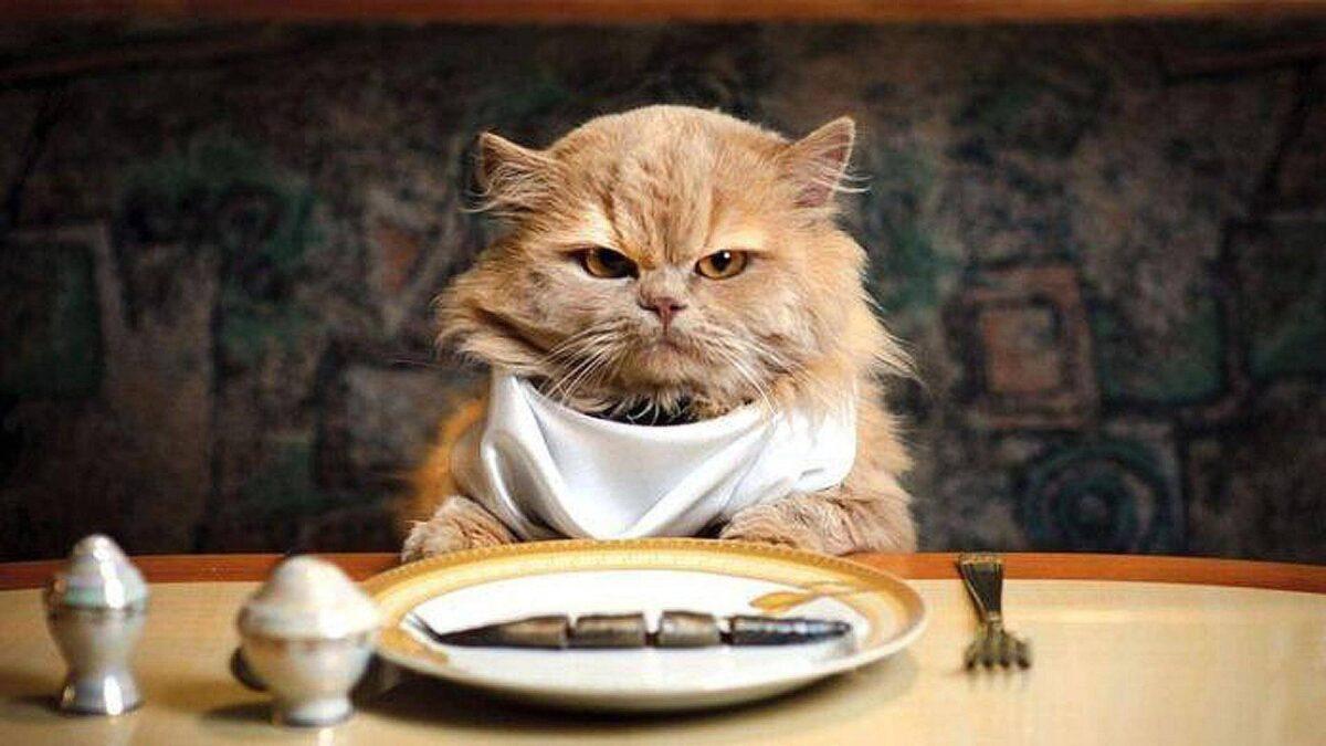 غذاهای مضر برای گربه