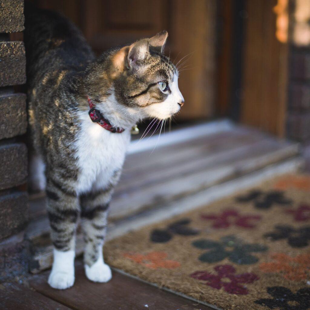 گربه قشنگ کنار پادری گل گلی