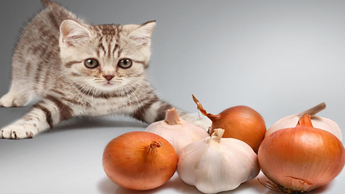 پیاز برای گربه ها