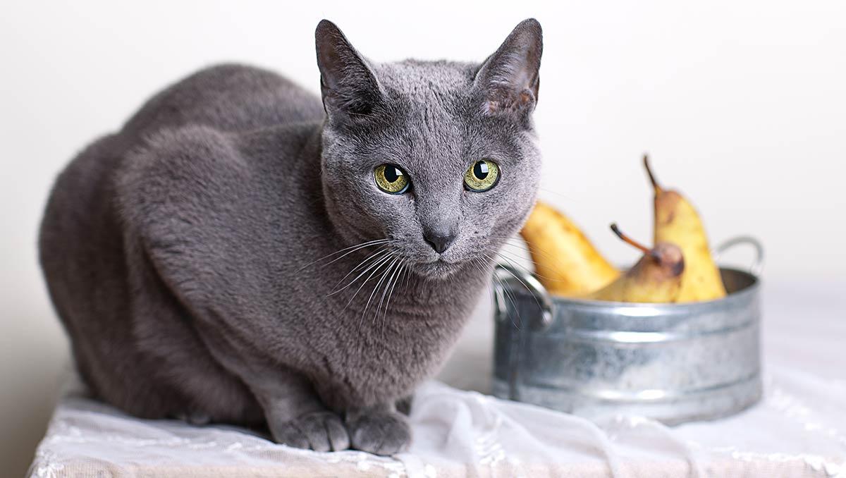 میوه های مضر برای گربه