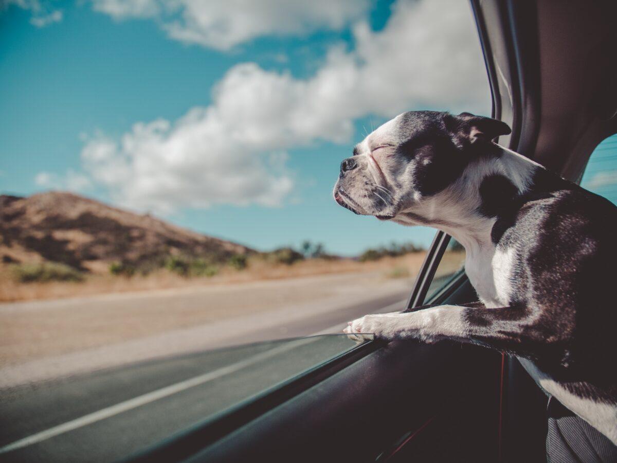 گرمازدگی در سگ