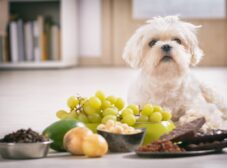 غذاهای ممنوعه برای سگ ها