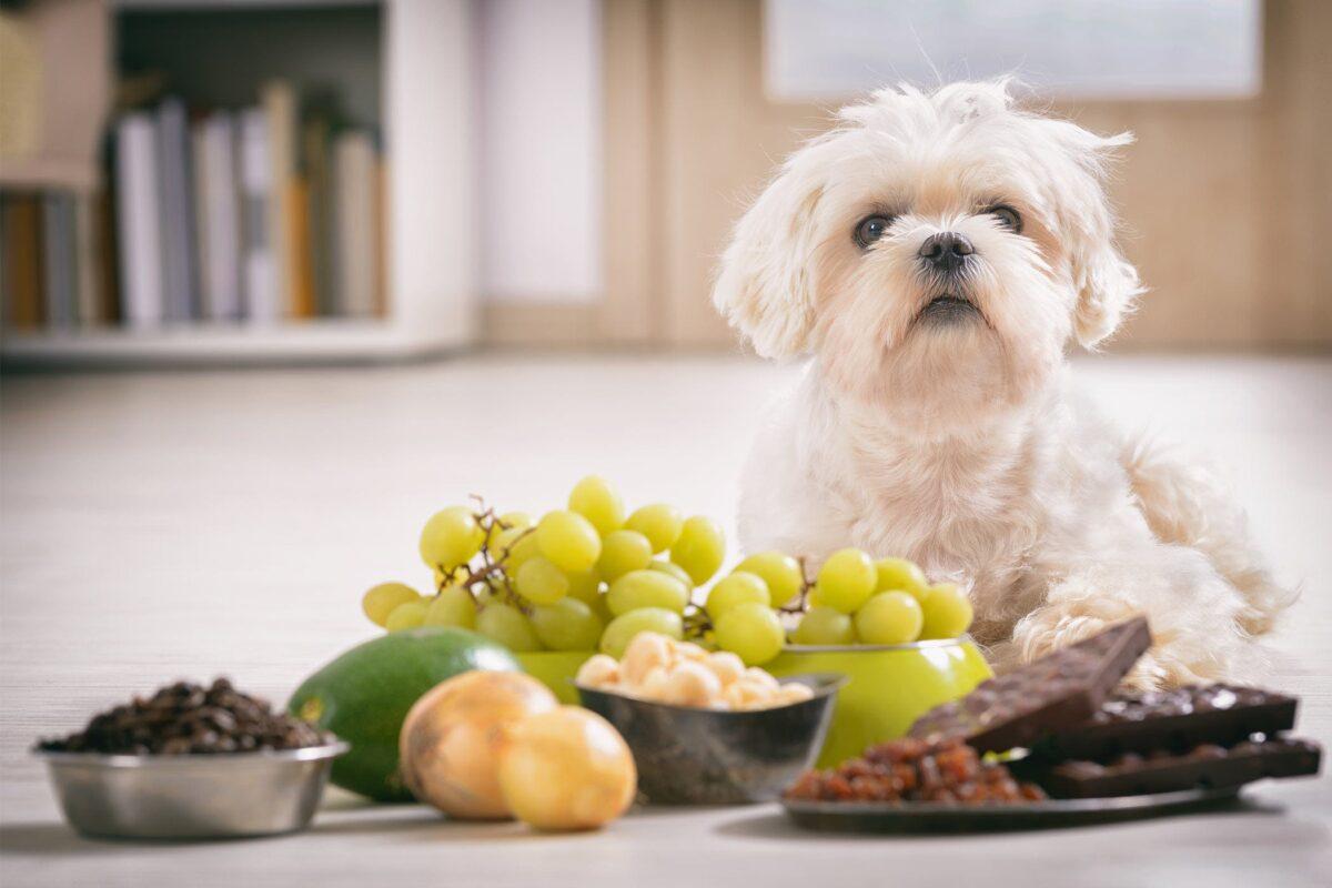 لیست غذاهای ممنوعه برای سگ ها