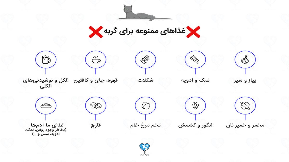 لیست غذاهای مضر برای گربه