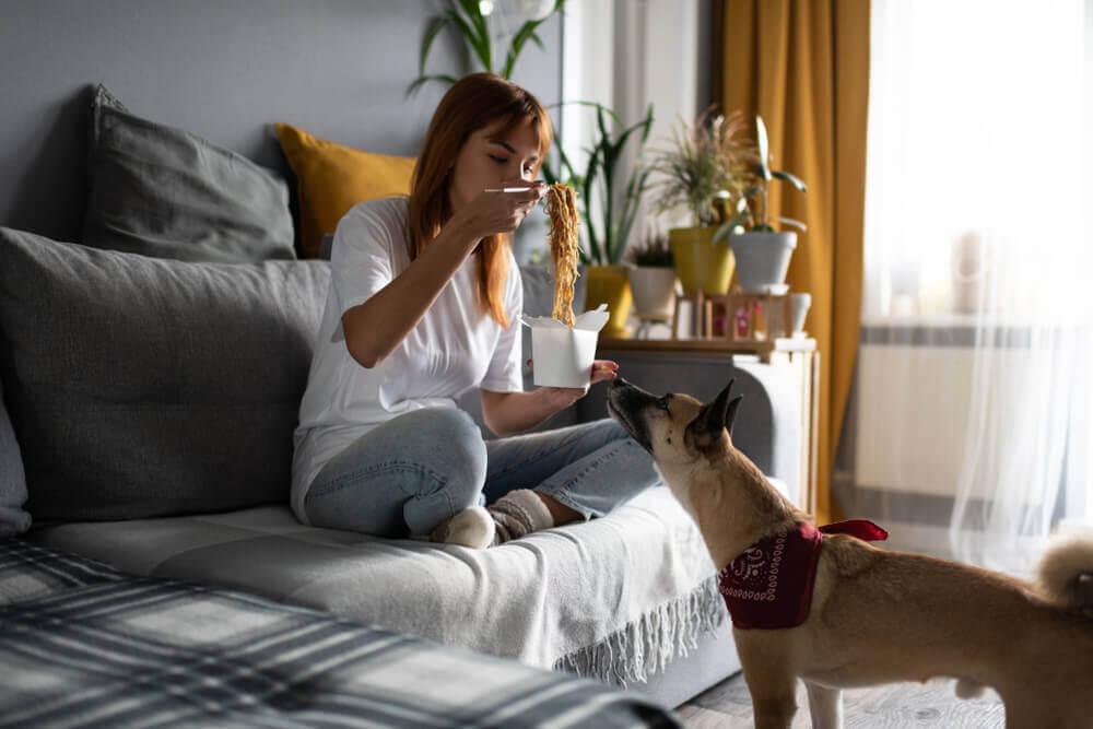 ماکارونی و سویا برای سگ
