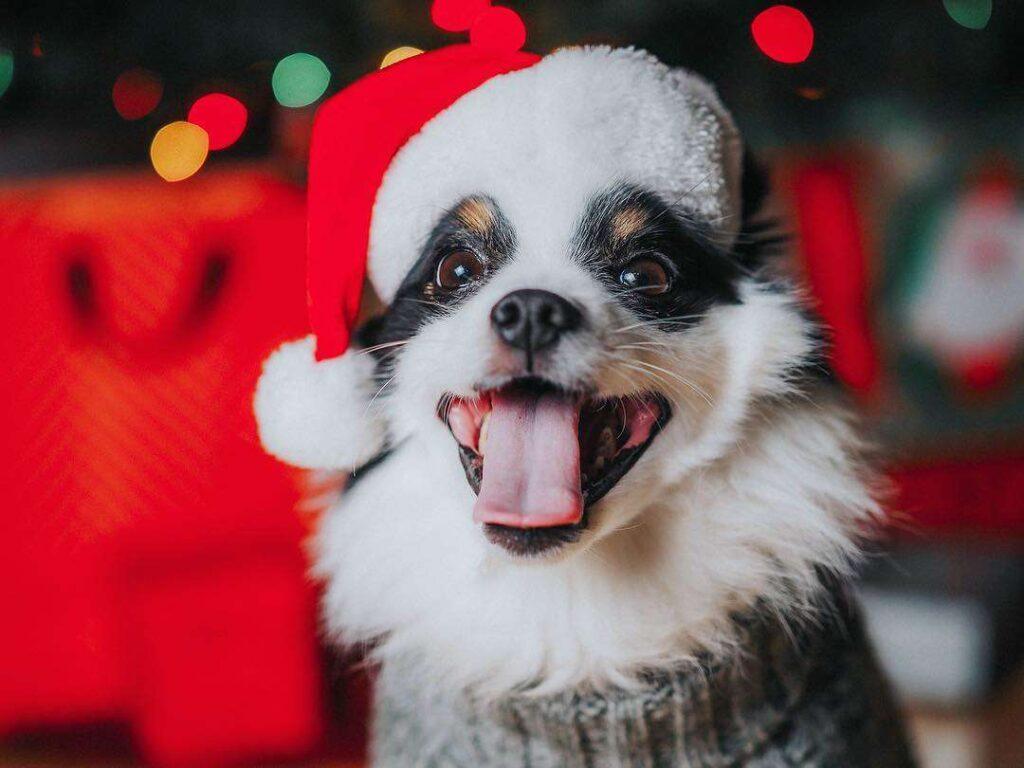 سگ با کلاه بابانوئل