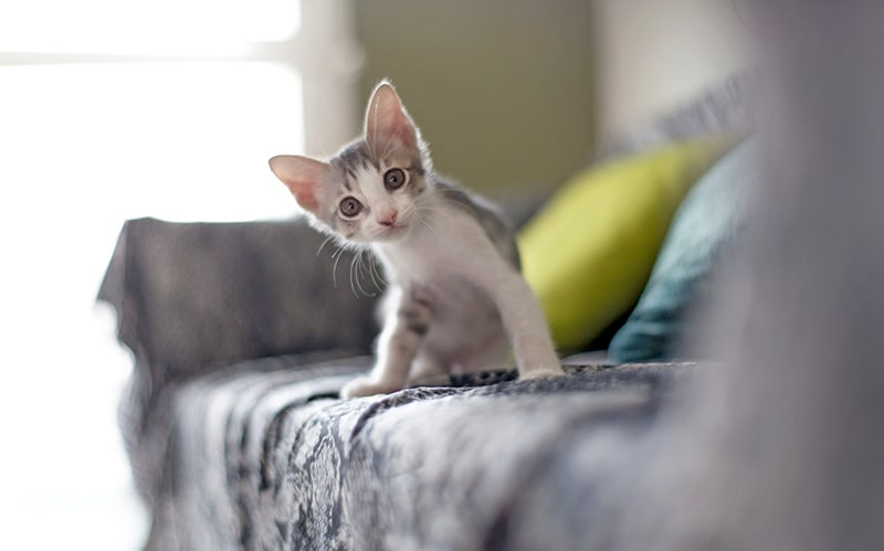 سرپرستی گرفتن بچه گربه