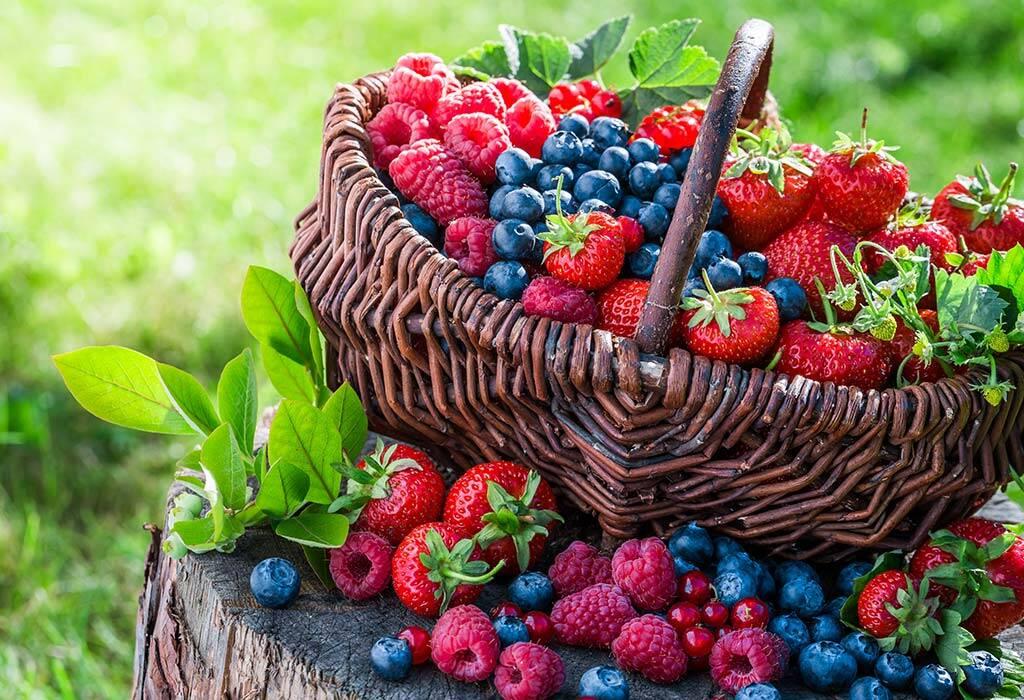 میوه های مفید برای طوطی