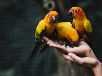 بهترین اسم ها برای پرندهها (اسم مناسب کاسکو+ عروس هلندی+ مرغ مینا+ مرغ عشق)