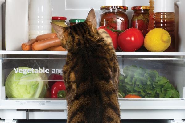 فضولی کردن گربه در یخچال