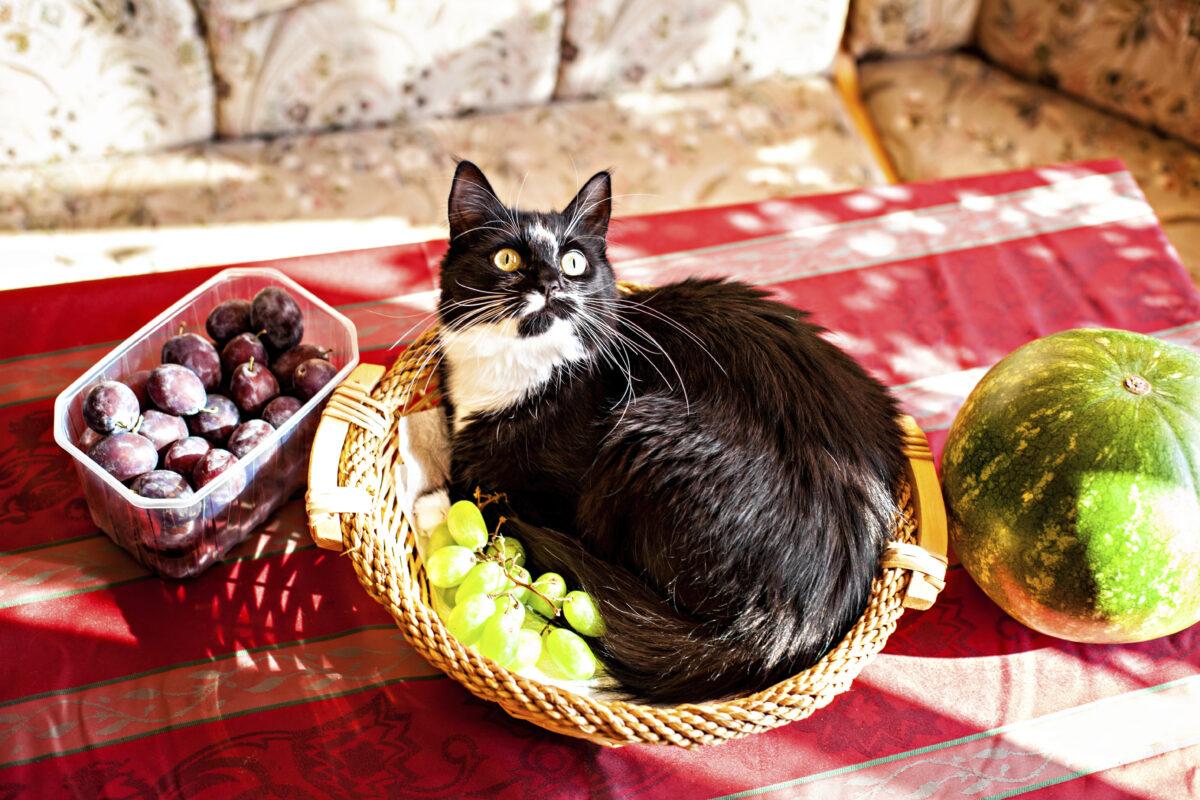 گربه در سبد میوه