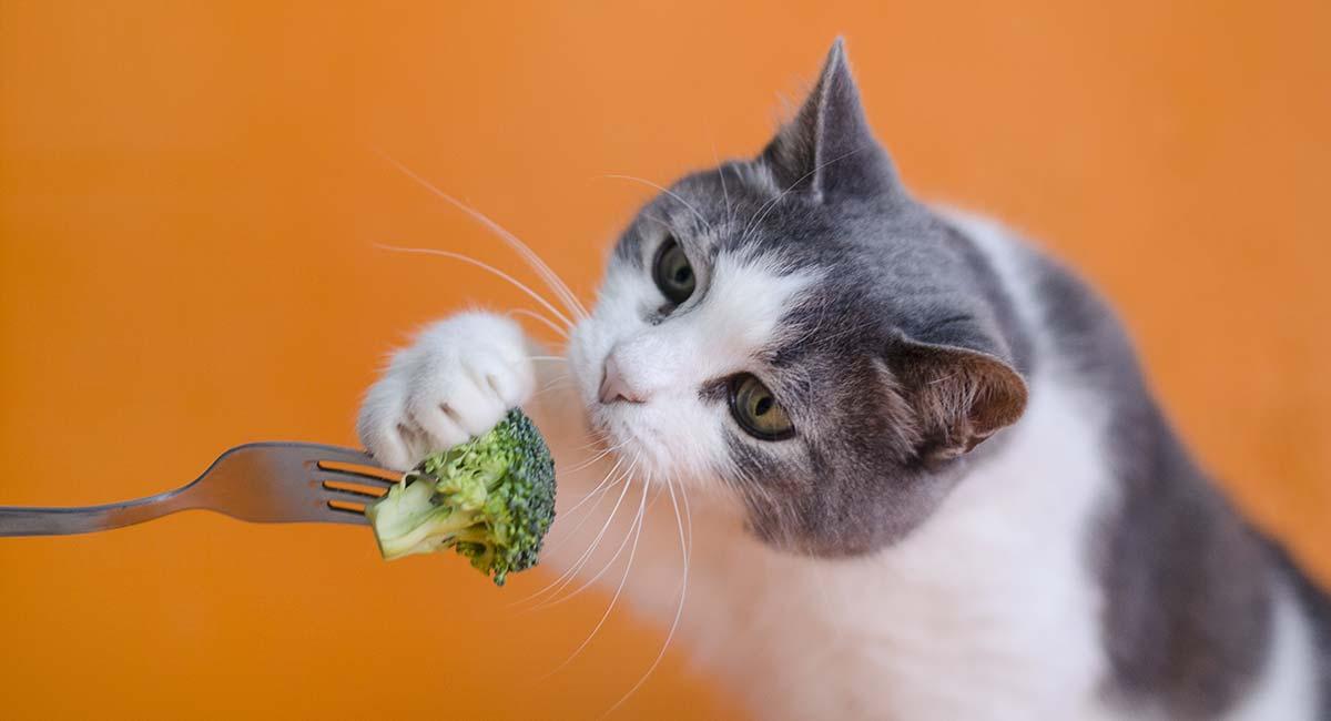 گربه در حال گرفتن بروکلی از سر چنگال
