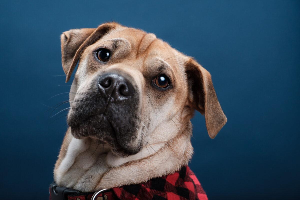 عکاسی از حیوانات سگ ژست گرفته