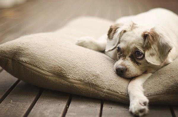 توله سگ در حال استراحت