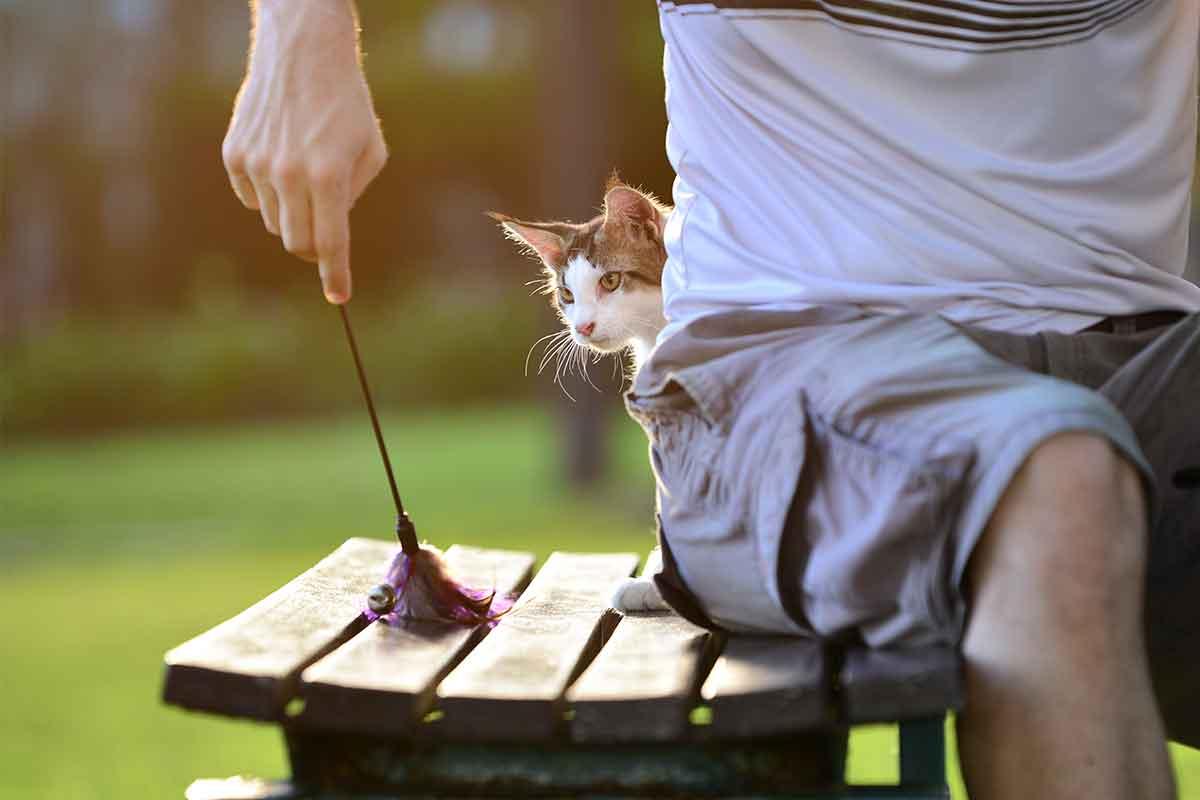 تربیت گربه خیابانی