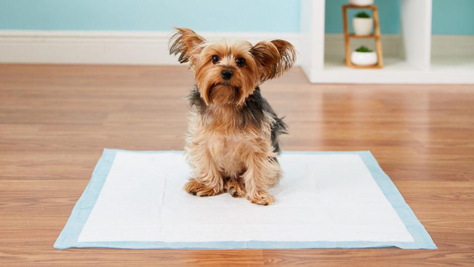 آموزش تصویری دستشویی سگ