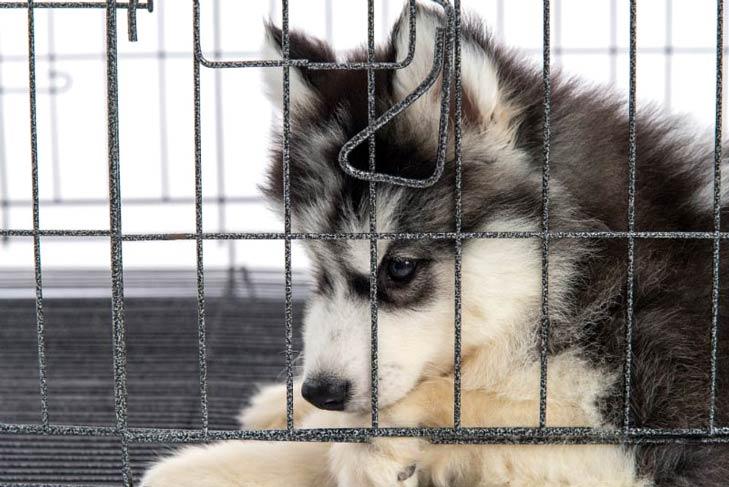 آموزش دستشویی سگ با قفس