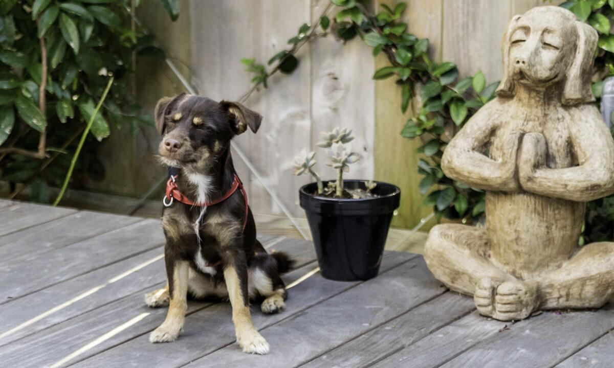 آموزش تربیت توله سگ برای نگهبانی
