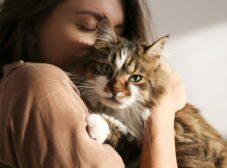 راهنمای سرپرستی و واگذاری گربه در تهران