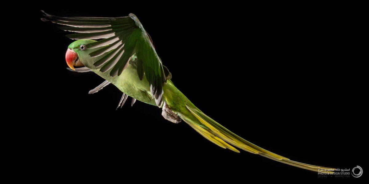 عکاسی از حیوانات طوطی