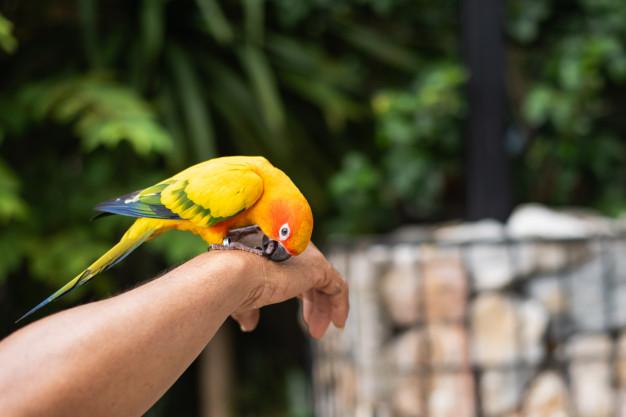 طوطی برزیلی نشسته روی دست