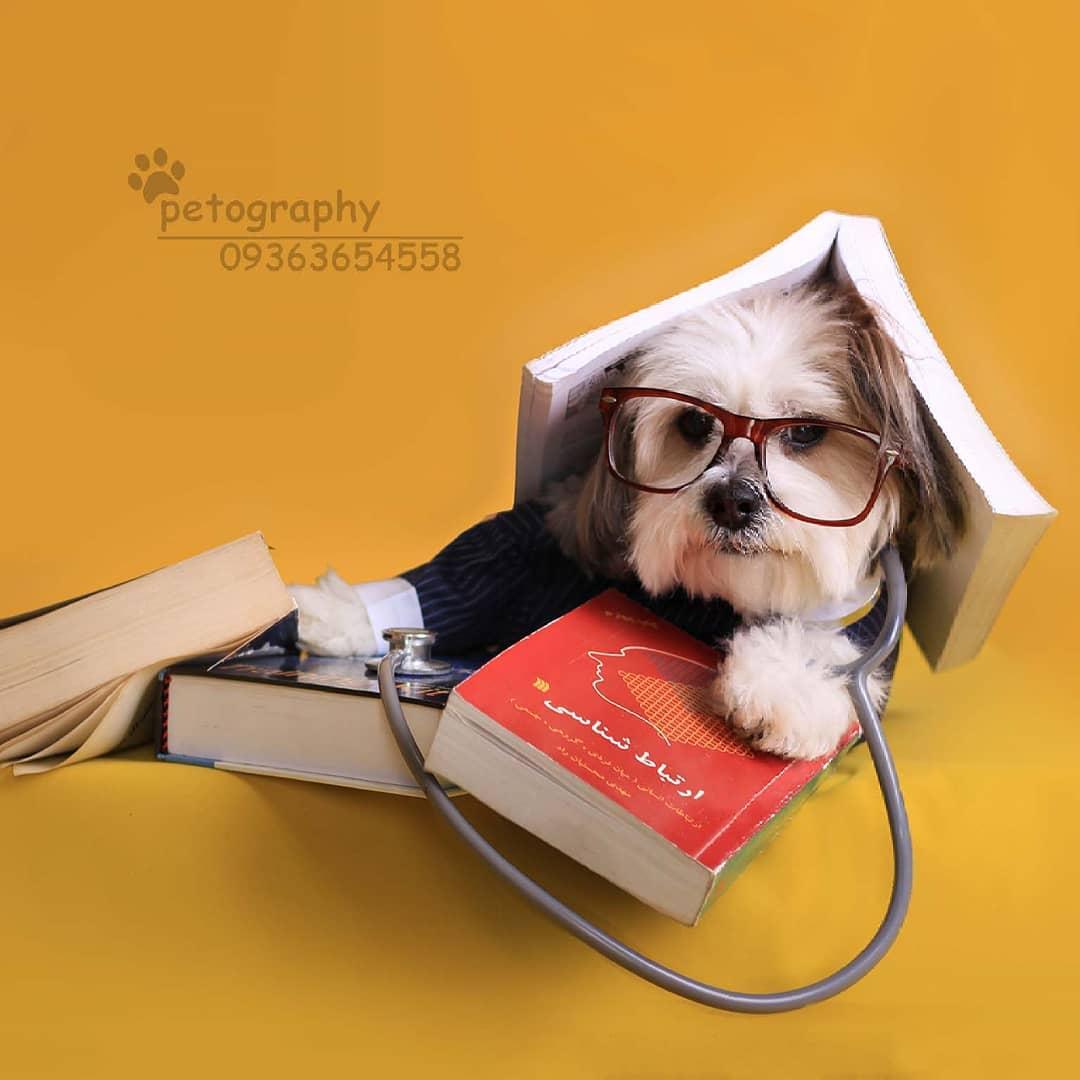 سگ بین کتاب ها