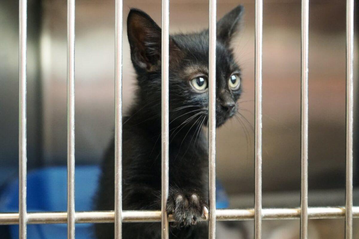 پناهگاه گربه ها