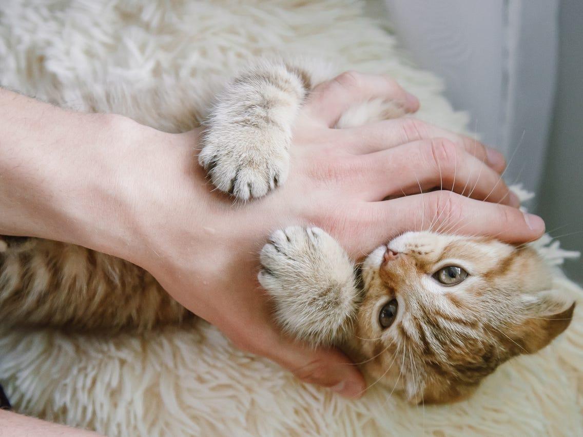 تربیت گربه برای گاز نگرفتن
