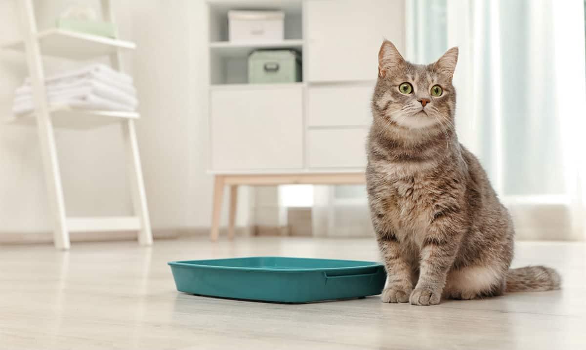 راهنمای خرید ظرف خاک گربه