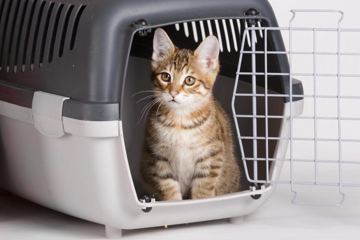 گربه داخل باکس