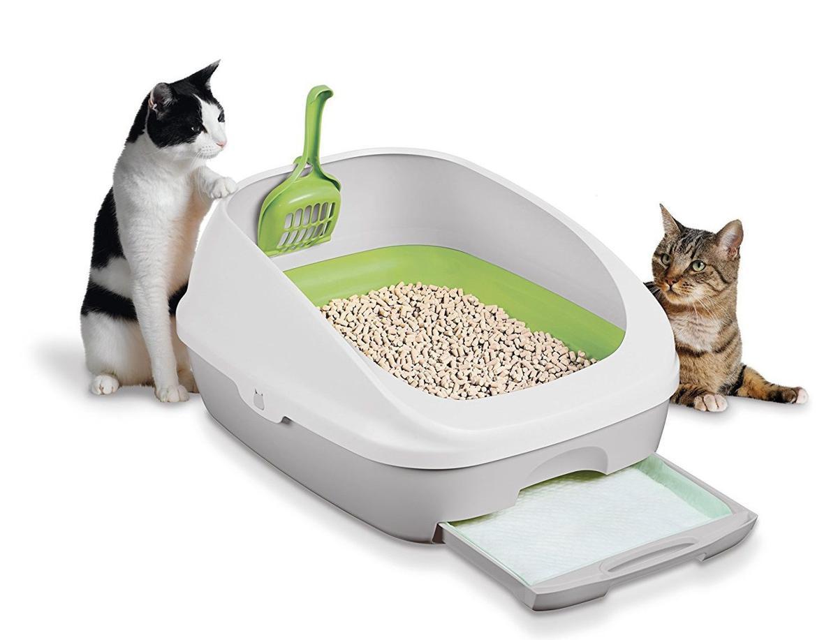 دو گربه کنار ظرف خاک بدون سقف