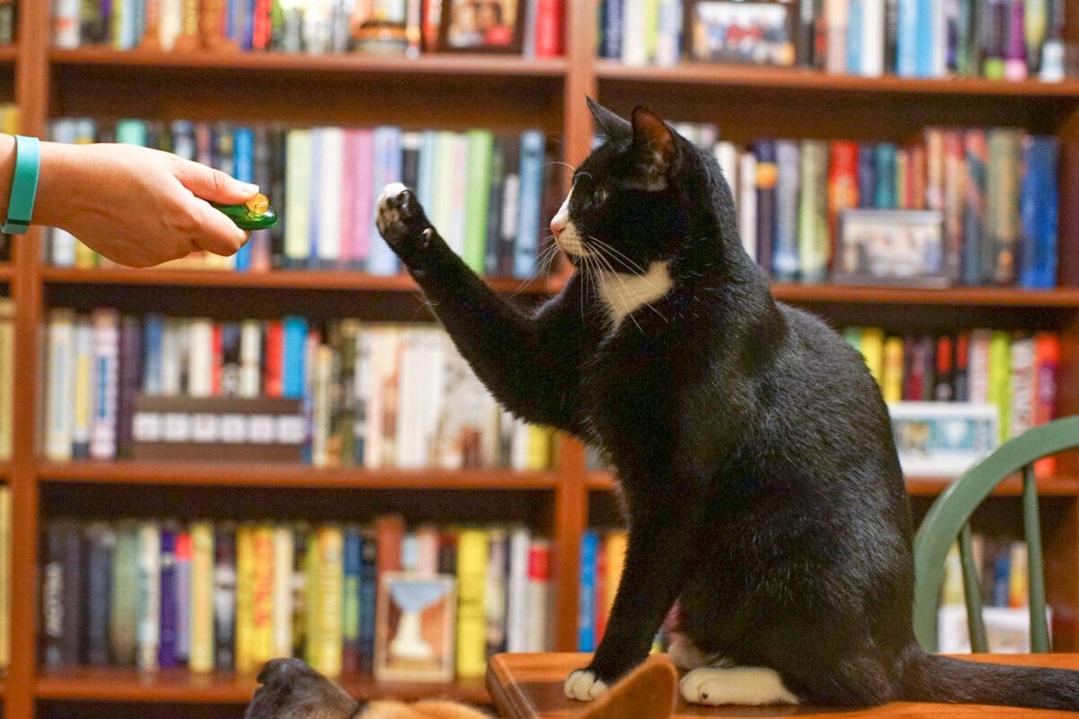 آموزش نشستن به گربه