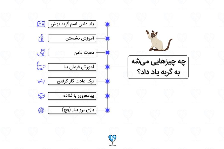 چیزهایی که میشه به گربه یاد داد