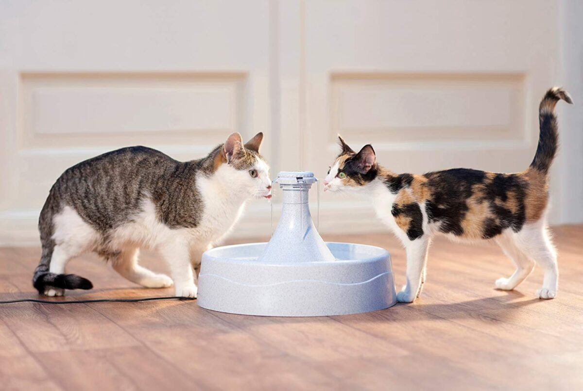 فواره آب گربه