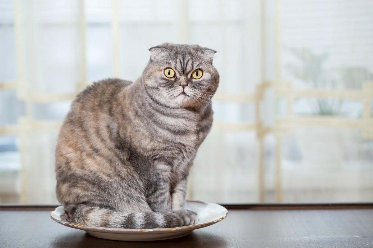 درست کردن غذای گربه رنال در منزل