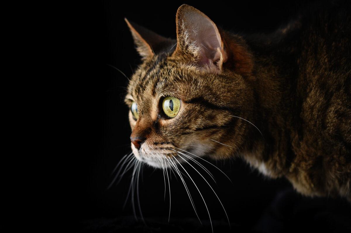 آتلیه عکاسی برای گربه