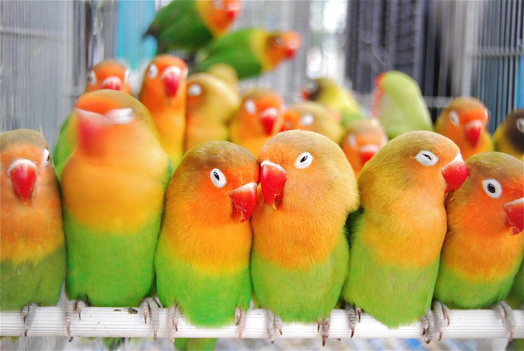 عکس طوطی های برزیلی