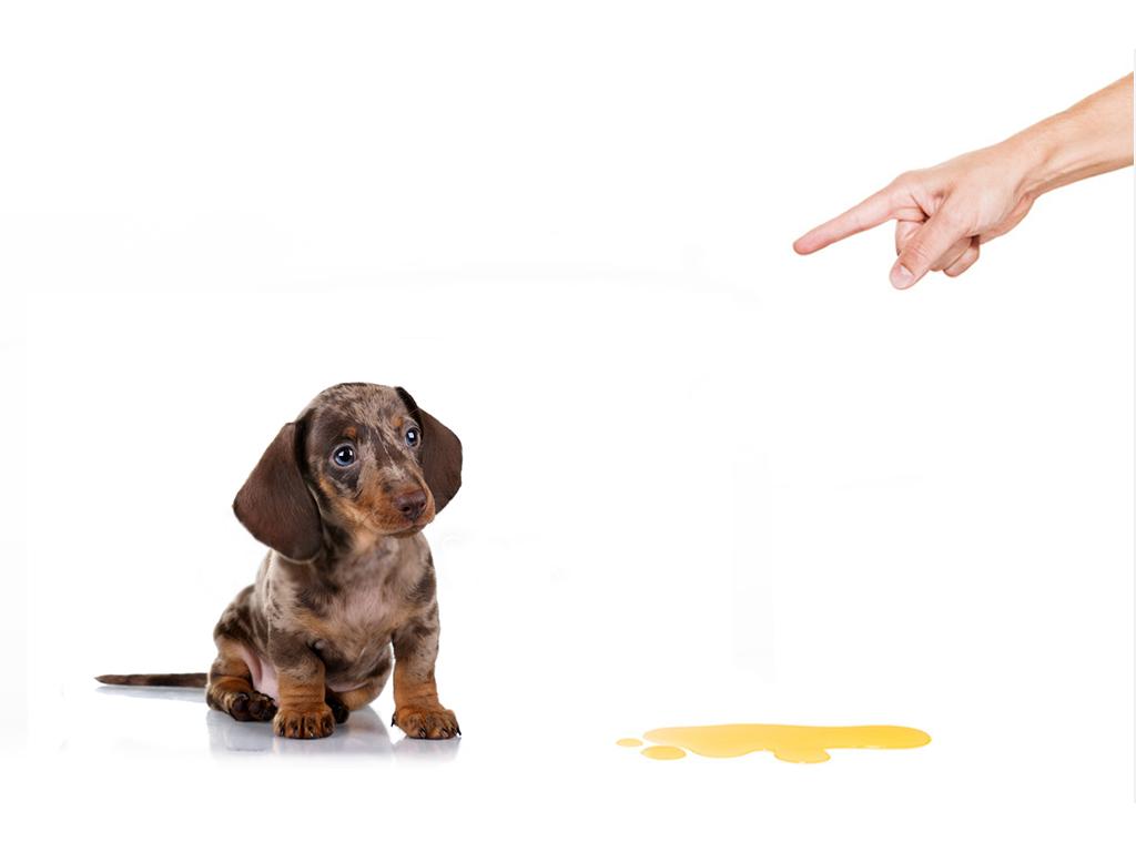 جلوگیری از ادرار سگ در خانه