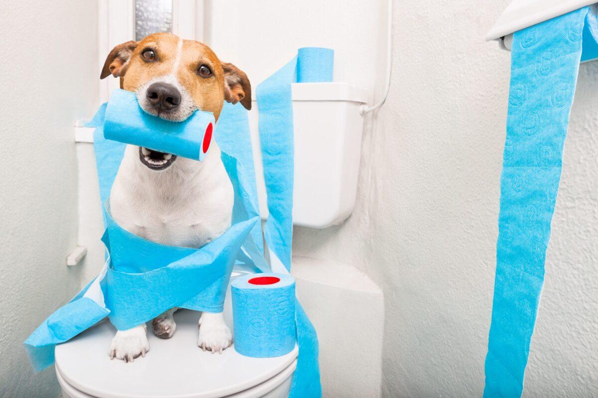 نحوه آموزش دستشویی به سگ به همراه نکات مهم تربیتی!