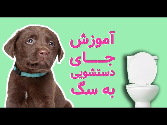 ویدیوی آموزش دستشویی به سگ
