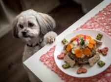 راهنمای تهیه غذای خانگی برای سگ شیتزو