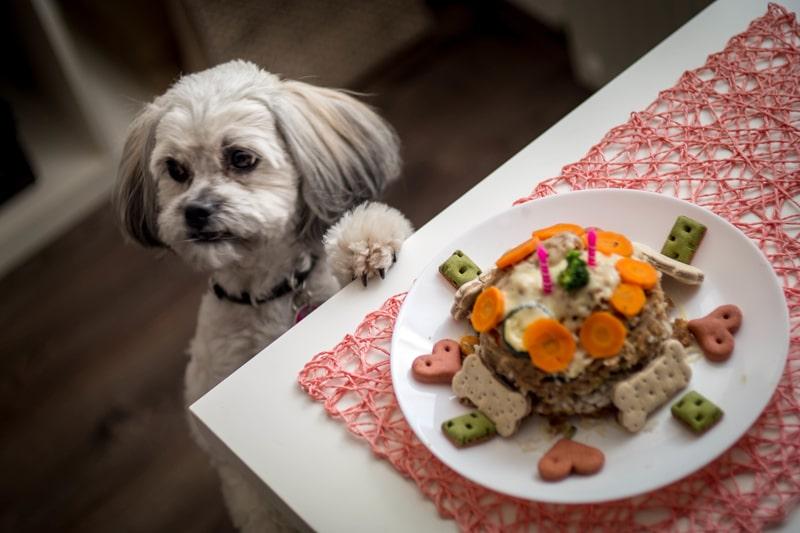 غذای خانگی برای سگ شیتزو