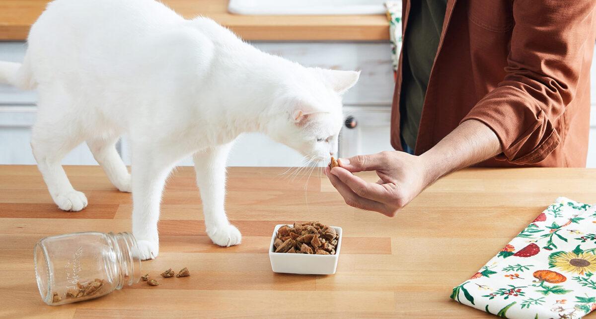 غذای خشک رنال گربه