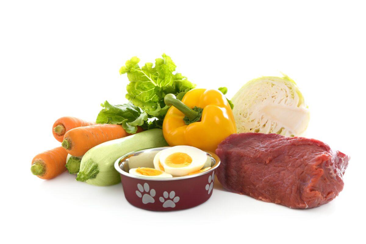 غذاهای مفید برای سگ