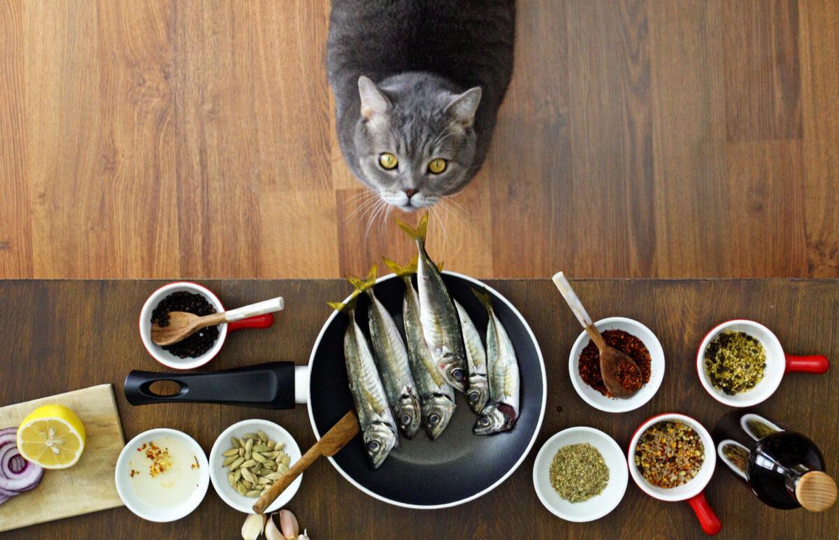 غذای خانگی برای گربه