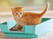 راهنمای انتخاب و خرید توالت و ظرف خاک گربه