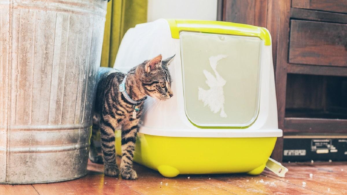 خرید توالت گربه مسقف
